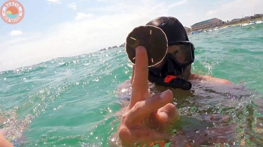 How to Find Sand Dollars at the Beach Destin Florida Shelling